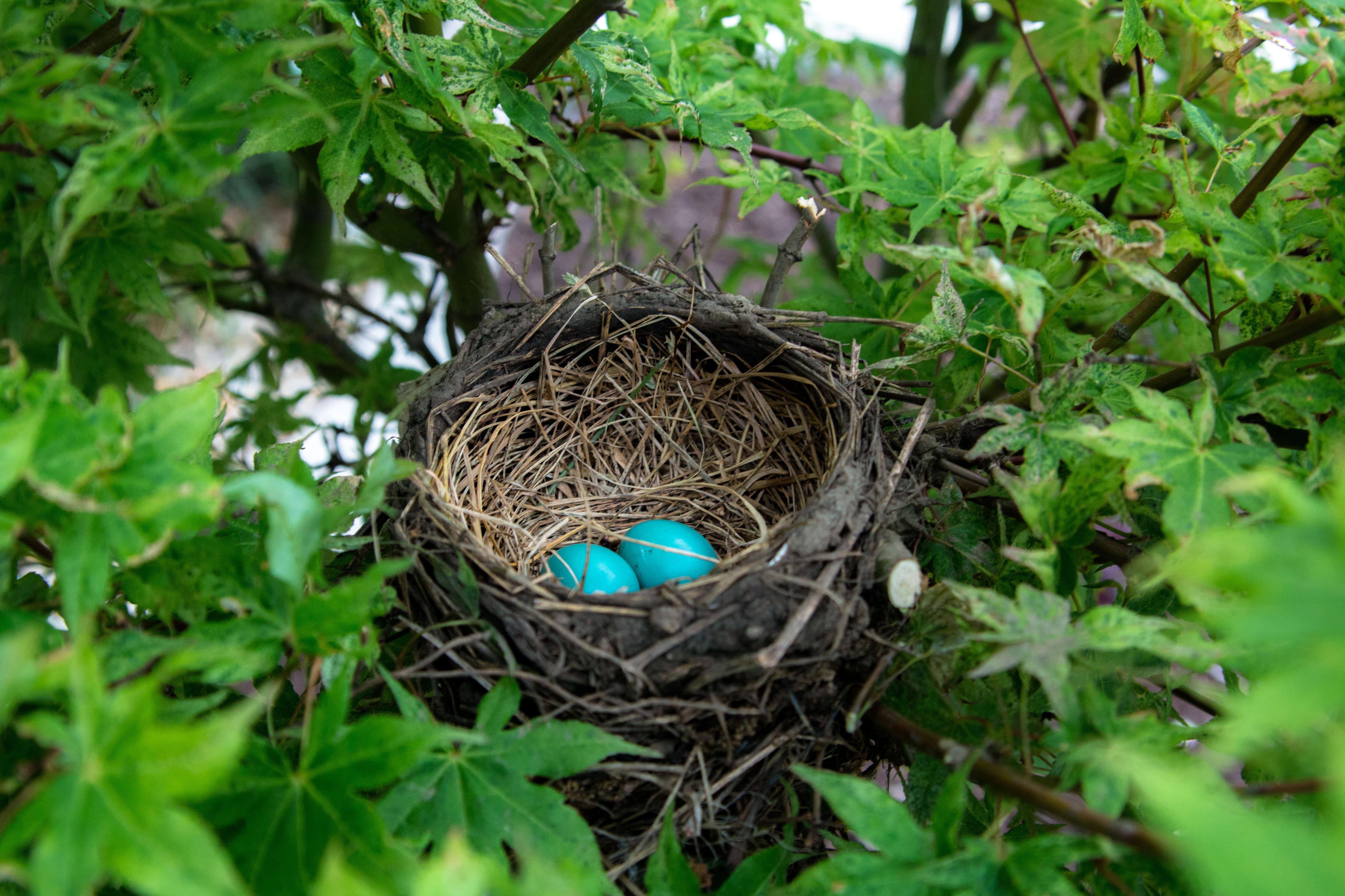 Eggs, by Landon Martin